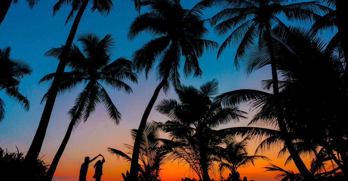 A palm tree in front of a sunset